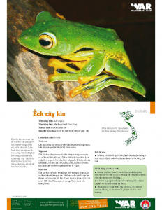 Black-webbed Tree Frog