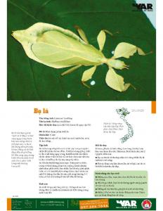 Linnaeus' Leaf Bug