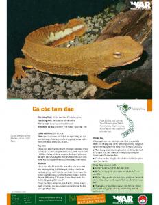 Vietnamese Salamander