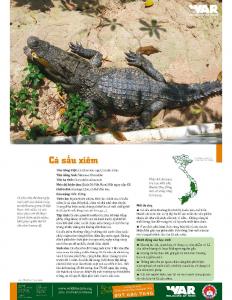 Siamese Crocodille
