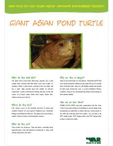 Giant Asian Pond Turtle